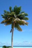 palm tree like exotic tree on a sunny beach