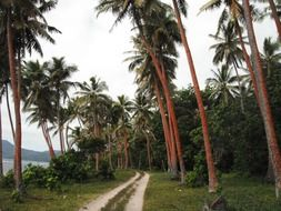 road among palm trees in the Caribbean
