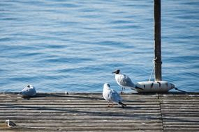 seagulls on a wooden pier on Lake Constance