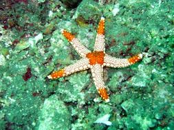 starfish under water in the Maldives