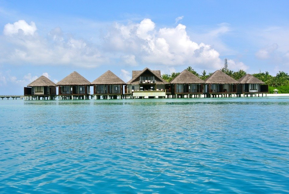 Maldives coconut tree resort