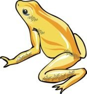 Frog Clipart N3