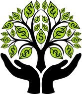money tree in hands