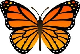 colorful orange butterfly for clipart