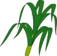 painted green corn leaves