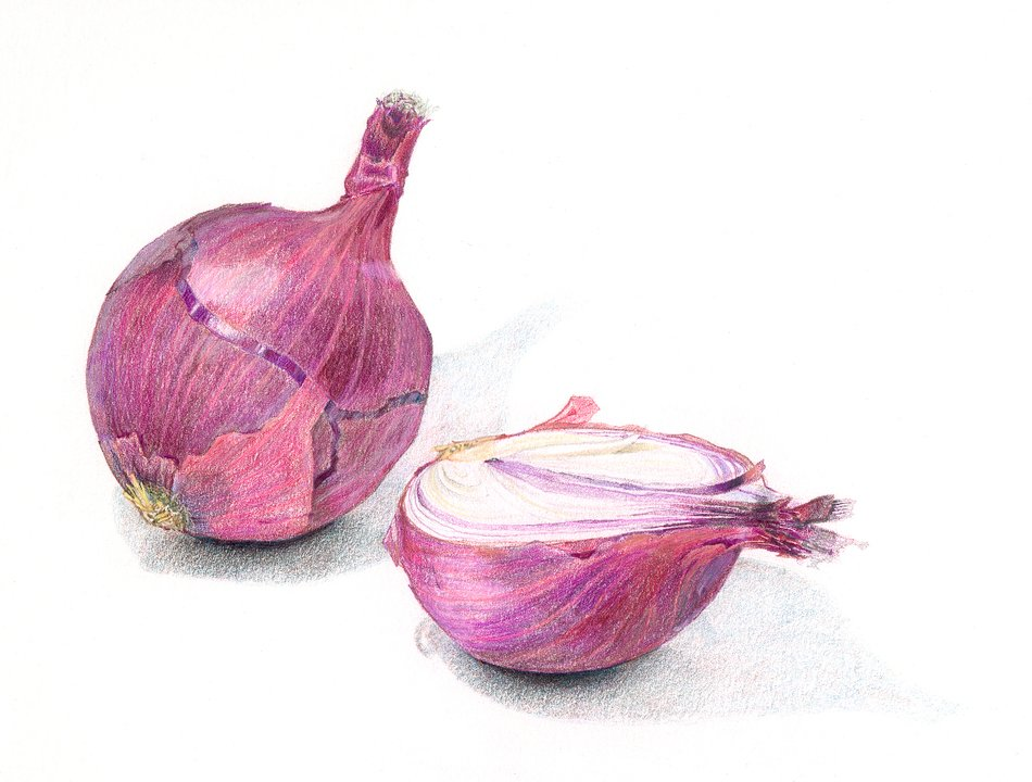 two red Onions at white surface