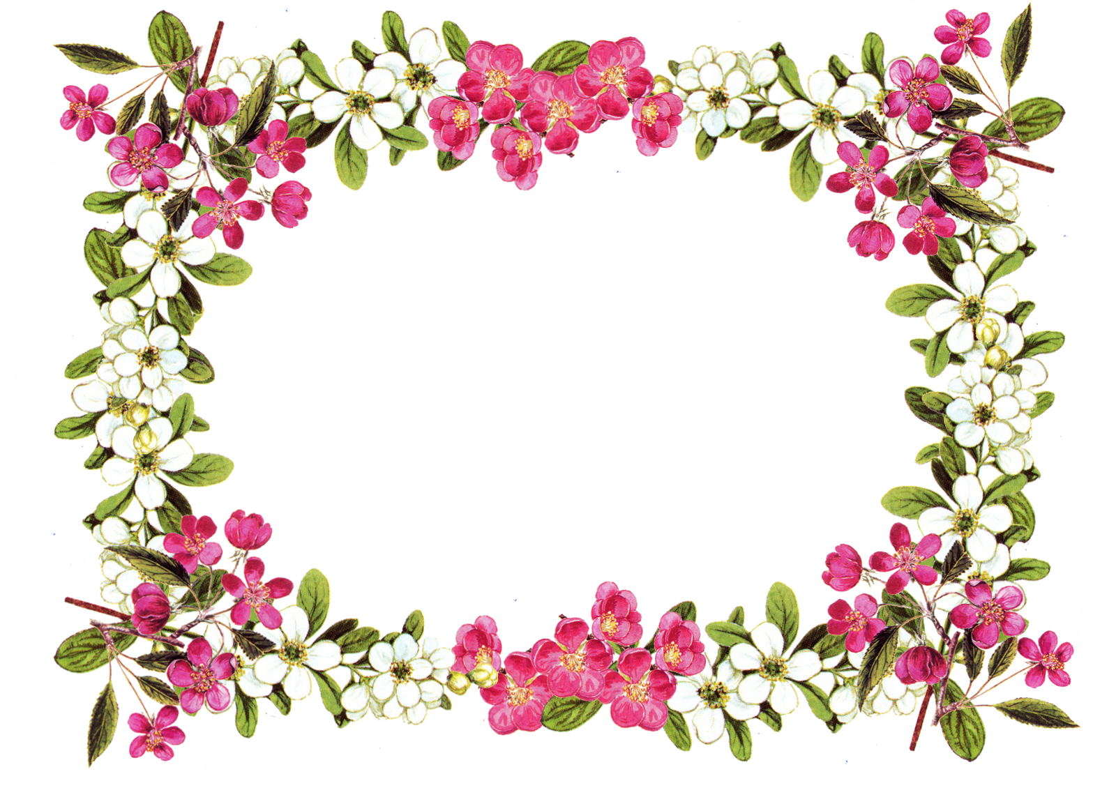 image about Printable Boarders identify Free of charge Printable Borders Electronic Flower Body Png free of charge impression
