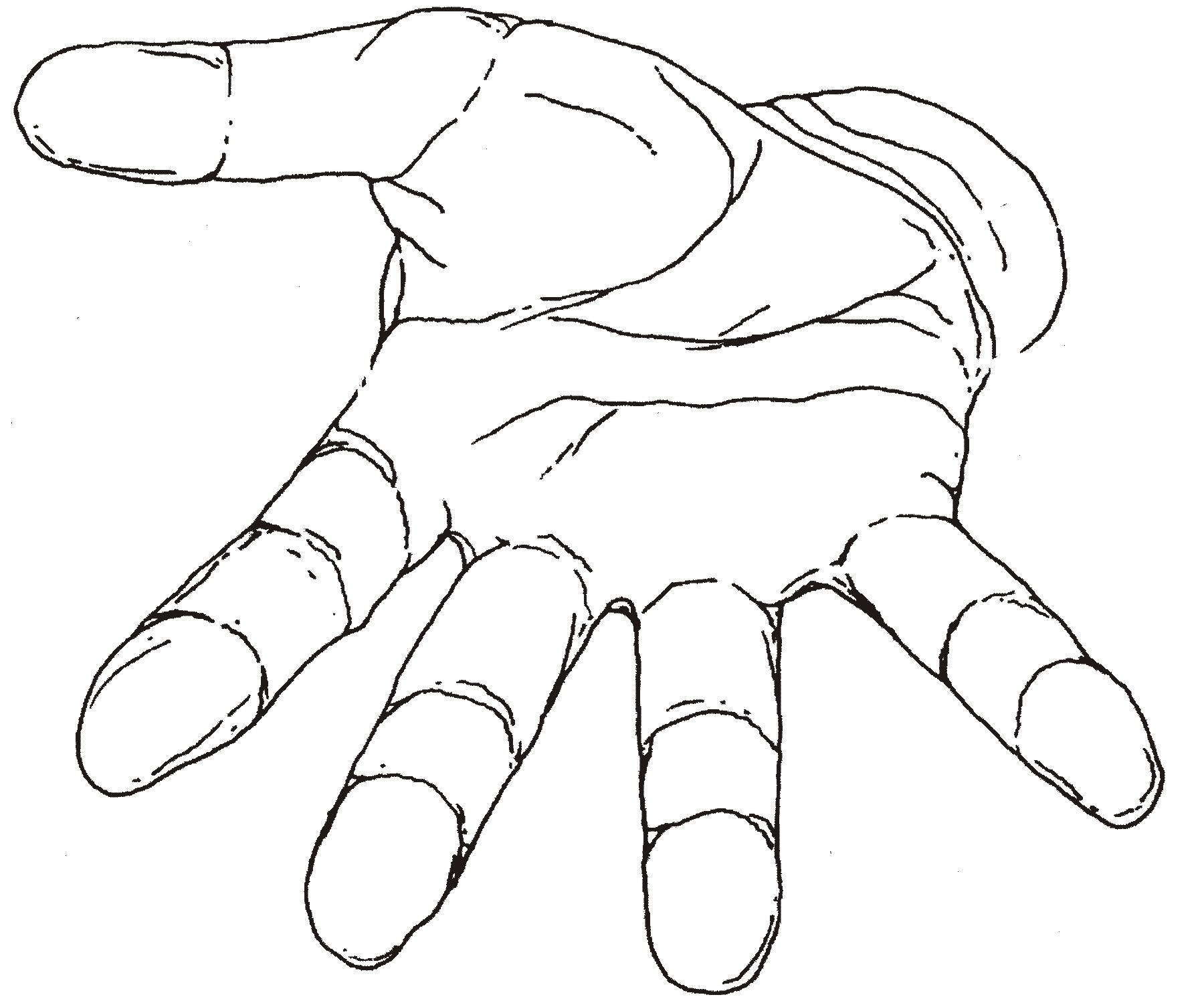 photograph about Hand Outline Printable titled 14 Hand Determine Template Printable Frees That Your self Can