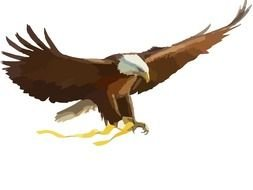 drawing of an American eagle