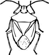black and white drawing of a beetle on a white background