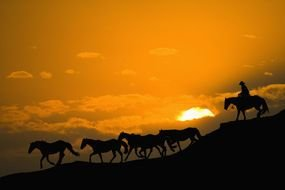a cowboy and a herd of horses descend from the mountain against the backdrop of a golden sunset
