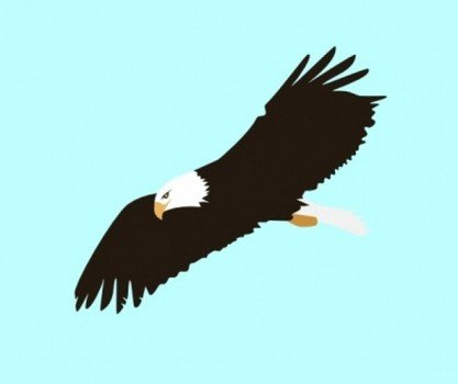 soaring eagle on the blue background
