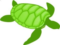 drawing green water turtle