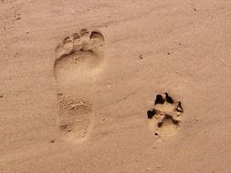 footprint of man and dog in the sand