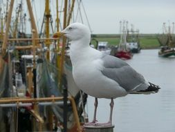 seagull on a fishing boat