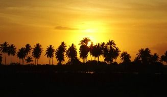 dark silhouettes of coconut trees against a yellow sunset