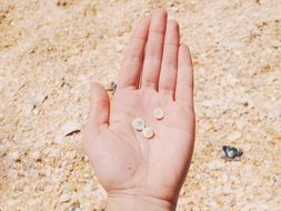 hands with seashells