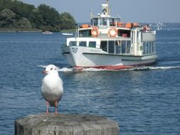 tourism ship and seagull