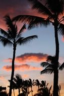 pink clouds over palm trees