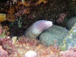 unusual beauty moray eel sea life