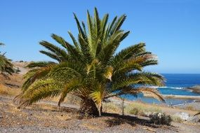 palm by the sea canary islands