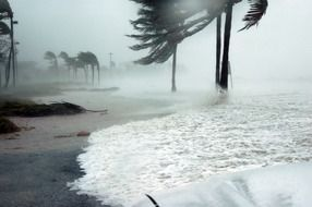 Ocean wave among palm trees under hurricane dennis