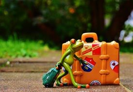 toy frog goes on a journey