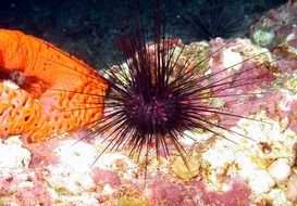 sea urchin in ocean water
