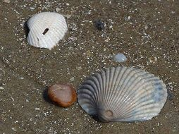 various sea shells on sand
