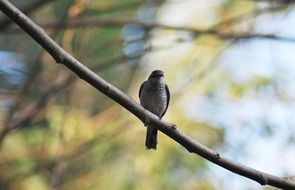 bird on a tree branch in india