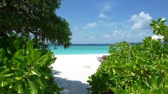 panorama of paradise beach in the Maldives