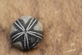 petrified sea urchin