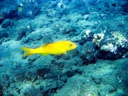 yellow fish in the underwater world