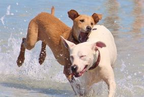 dogs play in the water