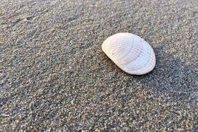 shell on a sand coast