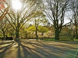 sunny central park on manhattan in new york