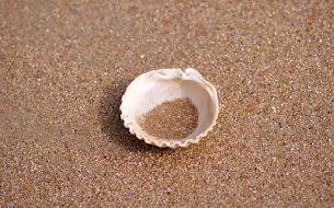 shell lies on dry sand