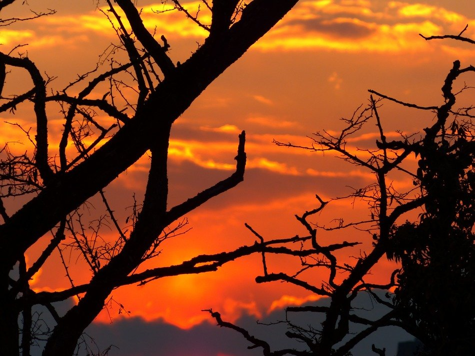silhouettes of tree branches on a sunset background
