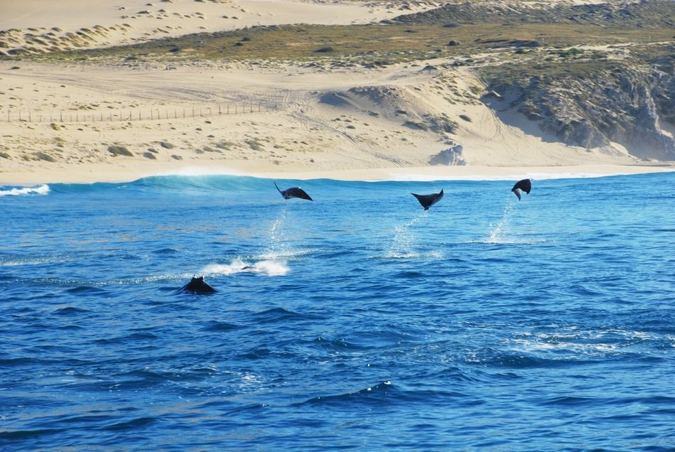 landscape of the stingrays in ocean in Los Cabos