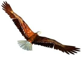 painted eagle in flight with big brown wings