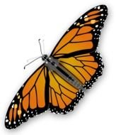 orange Monarch Butterfly drawing