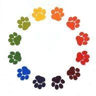 Paw Prints Color drawing