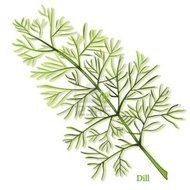 illustrated dill
