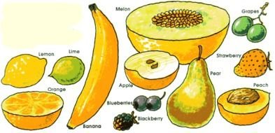 variety of fruits for clipart
