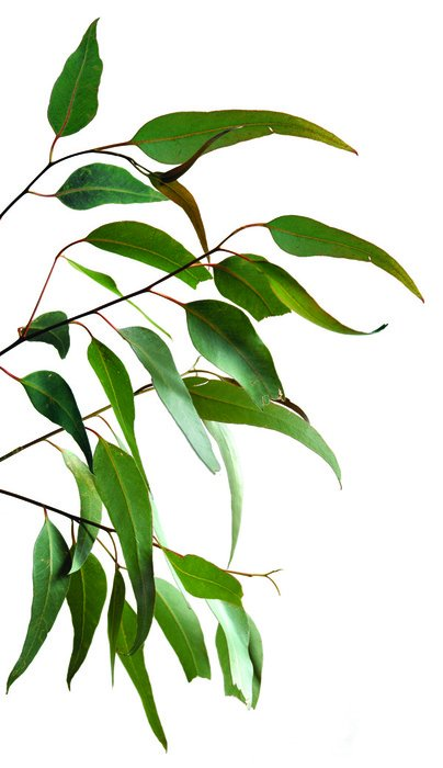 thin branch with green leaves