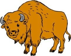 Clipart of brown buffalo