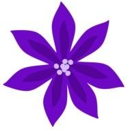 Purple Lily flower drawing