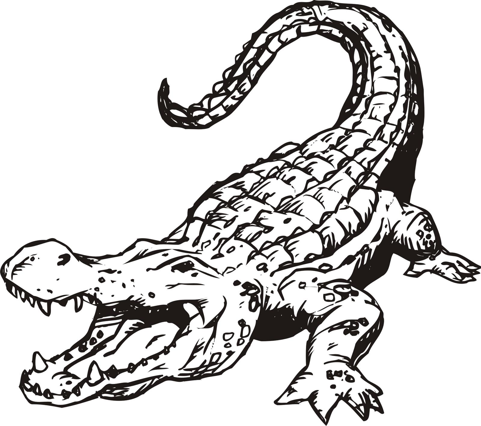 аллигатор картинка раскраска нашел фото подтверждения