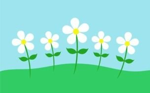 five white flowers on lawn, drawing