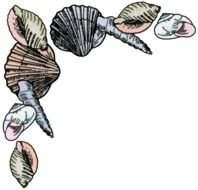 Border Borders Seashell Shell Sea Fish Tropical Ar 13 Bw clipart